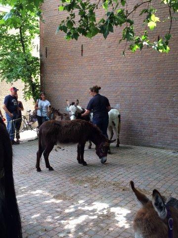 Dordrecht_7_170_5a0e95613fe1