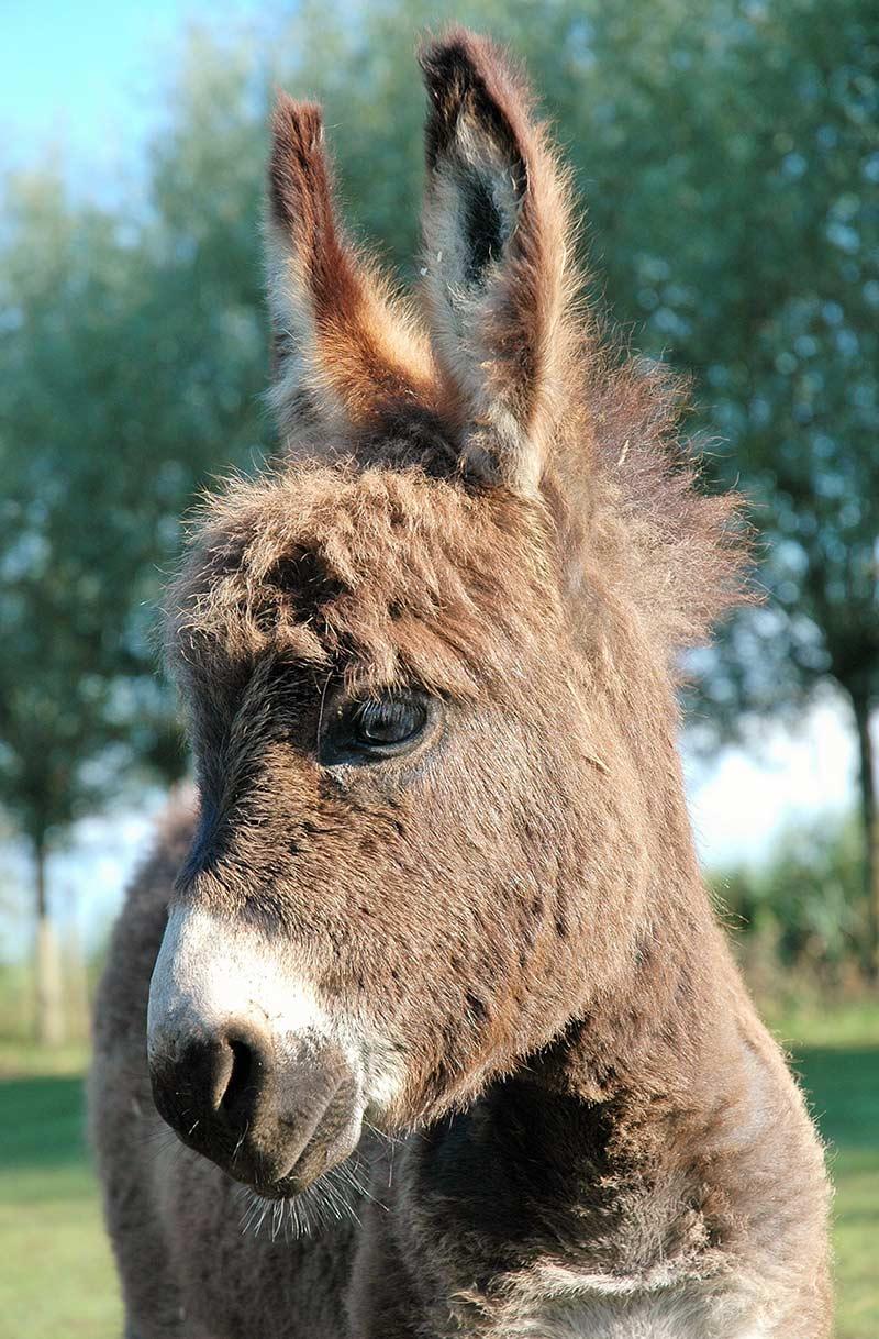 Volledig gevalvaniseerde hooiruif voor paarden, ponys, alpacas, ezels, grote geiten, wild e.d. Stabiele hooiruif voor het bijvoeren van paarden en ponys maar.